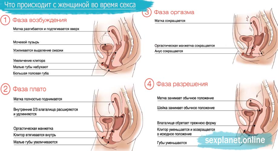 Организм женщины во время секса